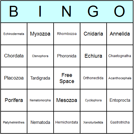 Animal Phyla Bingo Card
