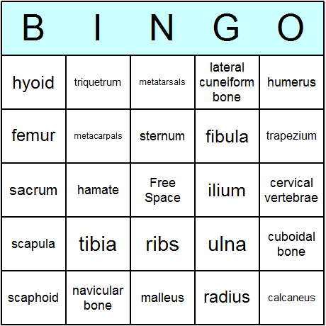 Human Skeleton Bingo Card